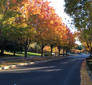 Fall trees and street